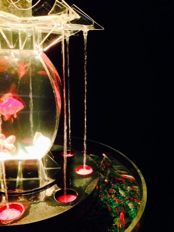 光と水と金魚の美しさ